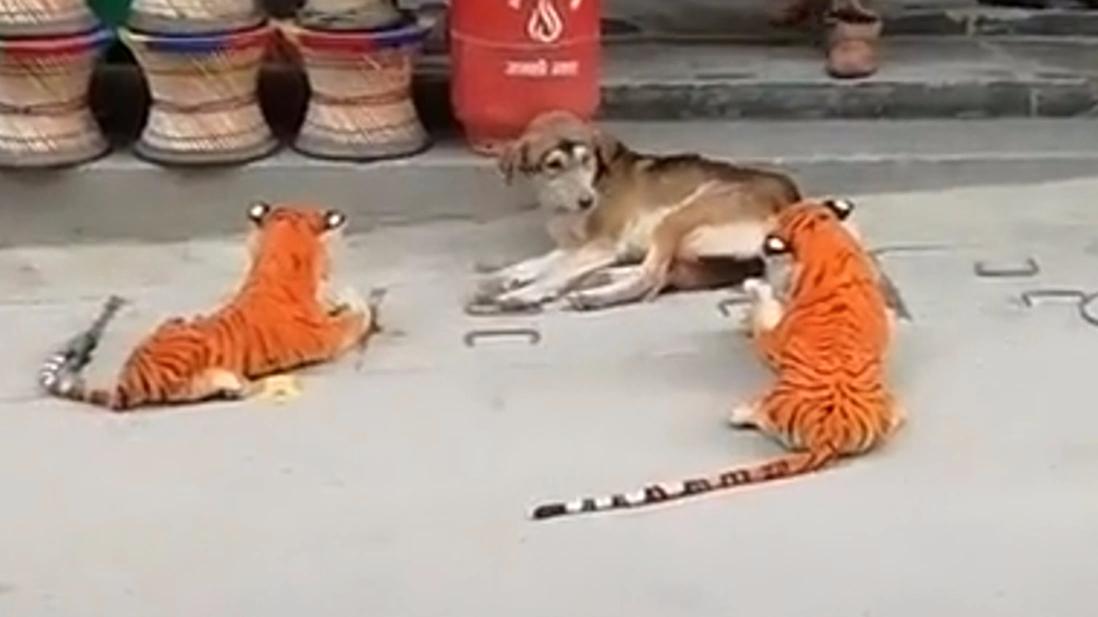 这狗子见老虎,吓出了电音的感觉~