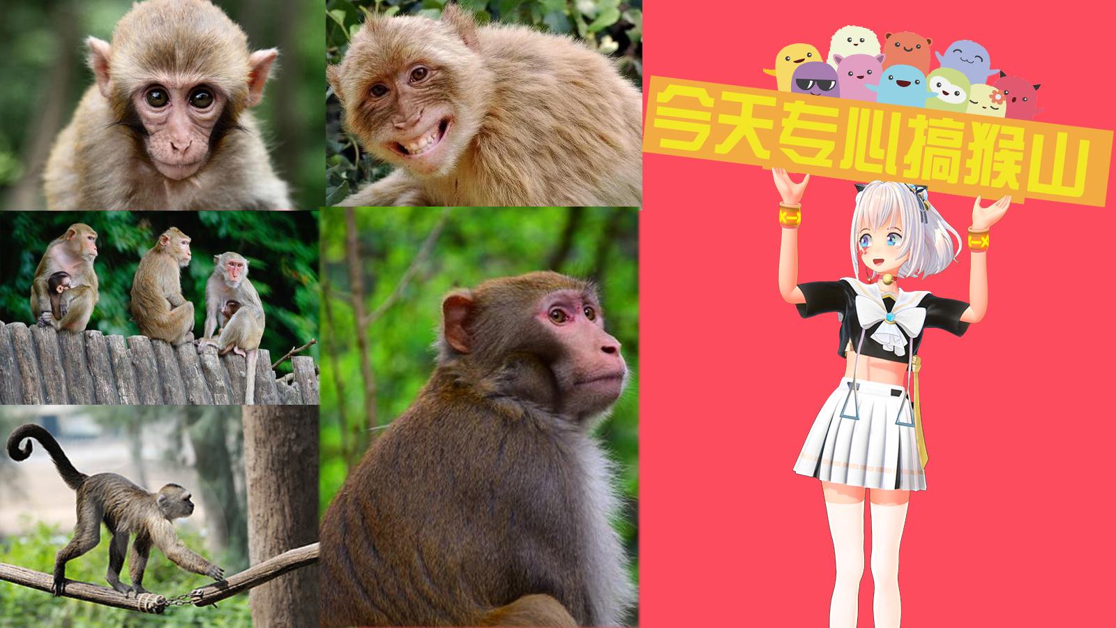 【录播】今天专心搞猴山!儿子你给我看好那些猴子啊!(是动物园里的猴子啊)