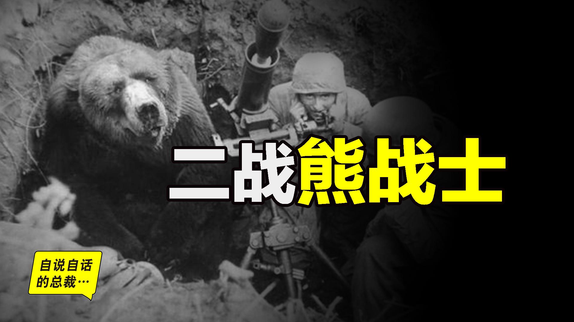 抽烟、喝酒、泡妞,这头熊在二战中还获得了军衔
