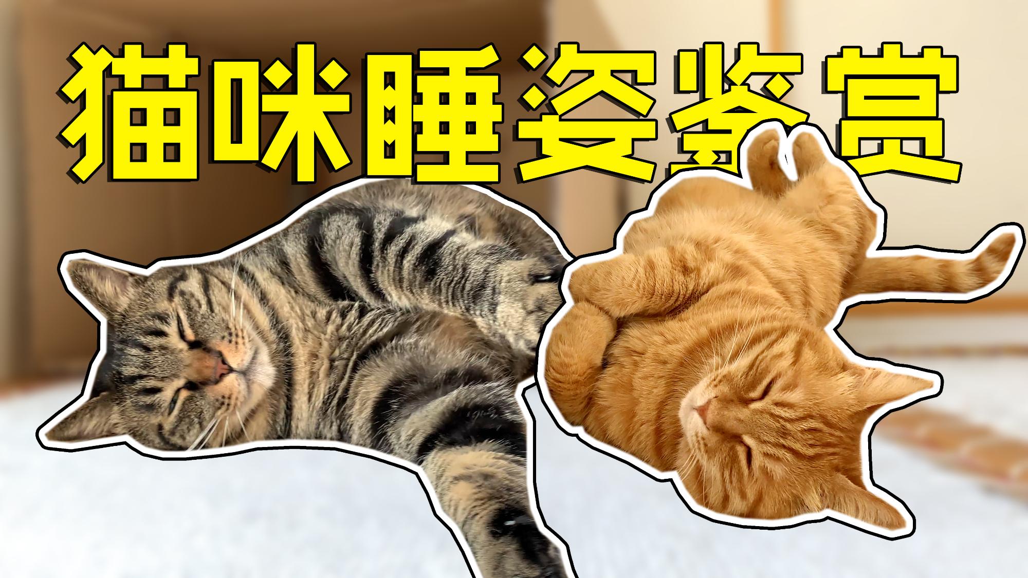 家里有只小猫咪,总揣着手手睡觉,该给他买件军大衣吗?