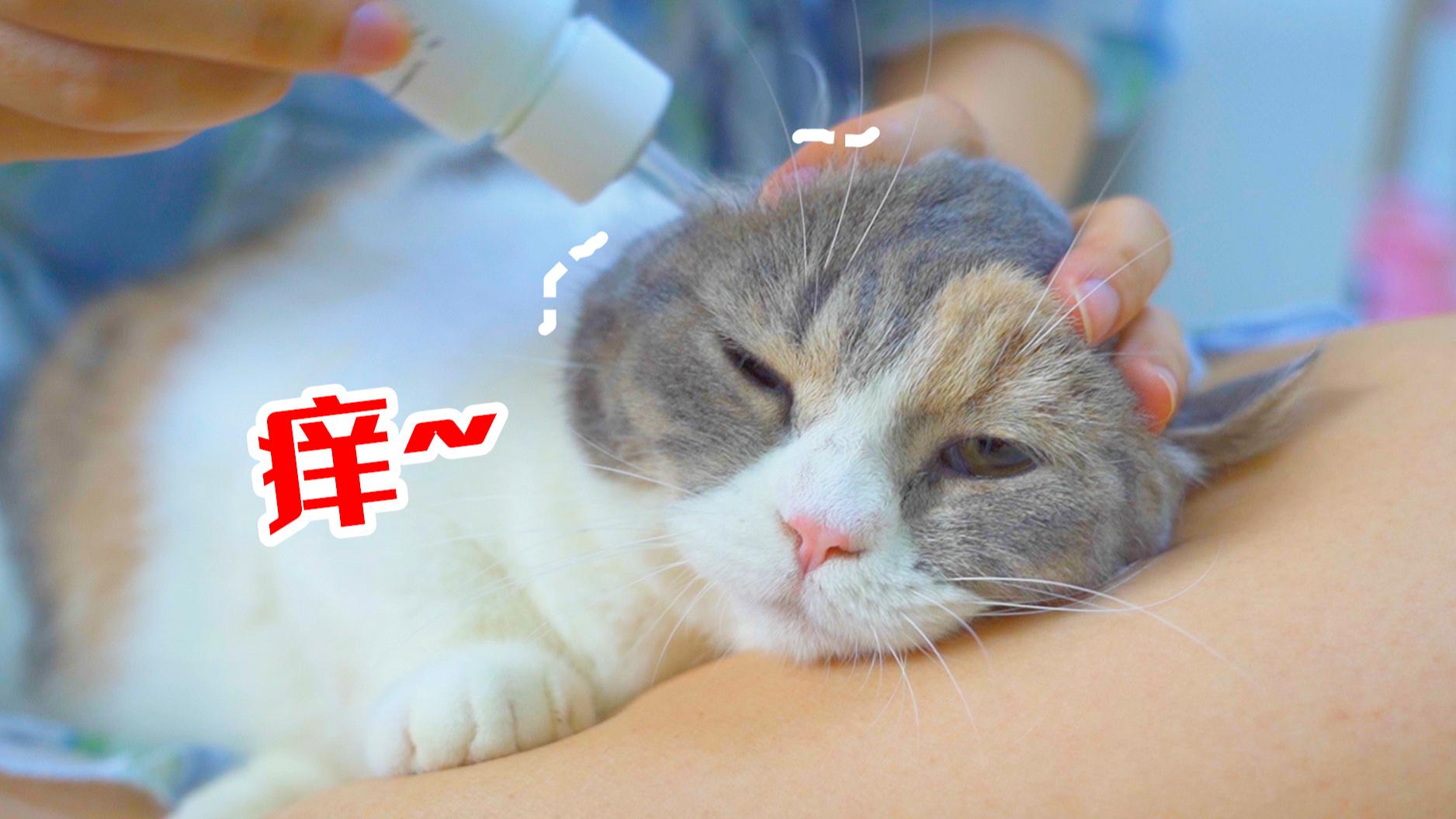 给猫咪洗耳朵,猫奇痒难忍,直接把女主人抓出血痕!