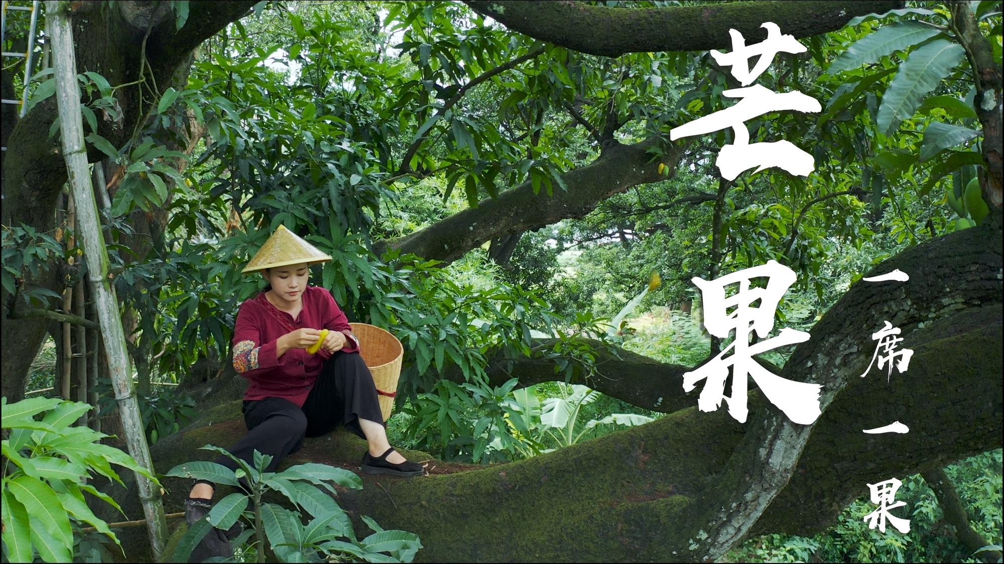 爬上300年芒果树,摘了30斤芒果,低温烤的芒果干甜香四溢!