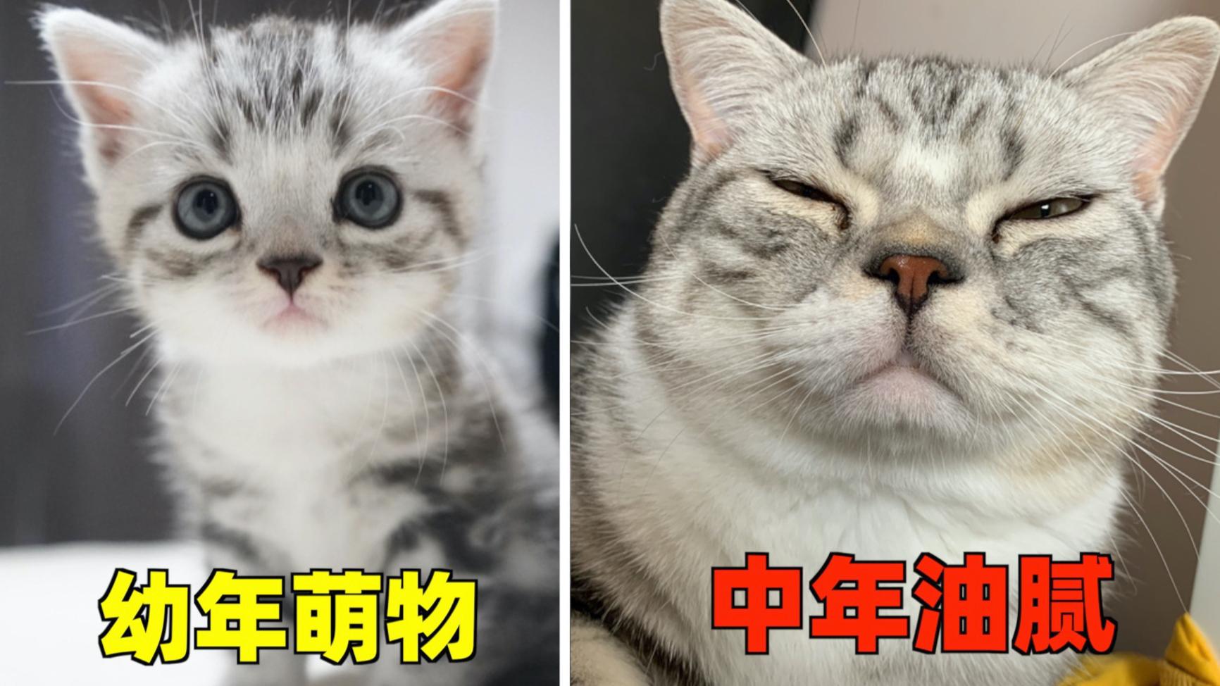 猫:我长残了?主人:你只是长成了猪!