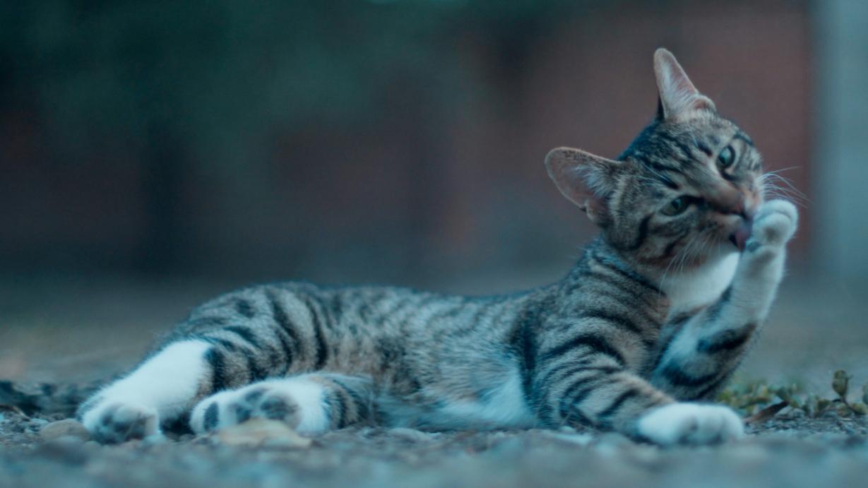 特种猫狗生活就是这么残酷,不仅斗争还需要自我陶醉!