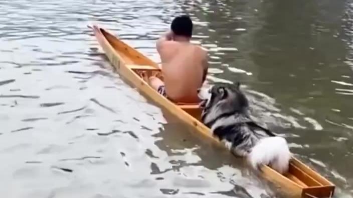狗子迷惑行为大赏
