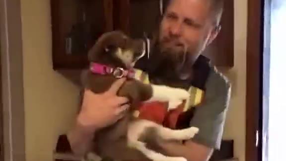 13岁的爱犬哈士奇2年前去世,爸爸非常难过。家人瞒着他准备了一只小二哈当礼物……