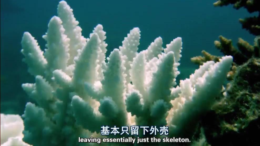 【纪录片】【无畏的地球】【大堡礁】【双语字幕】【1080P】【2013】