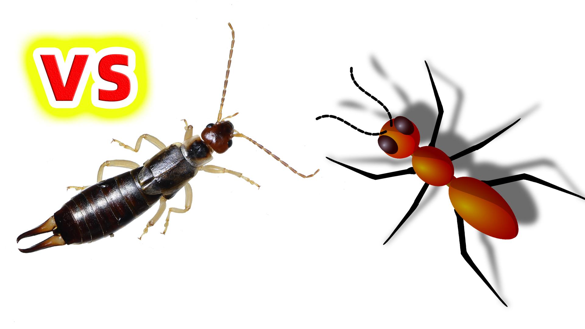 夹夹虫VS蚂蚁,结局会怎样?