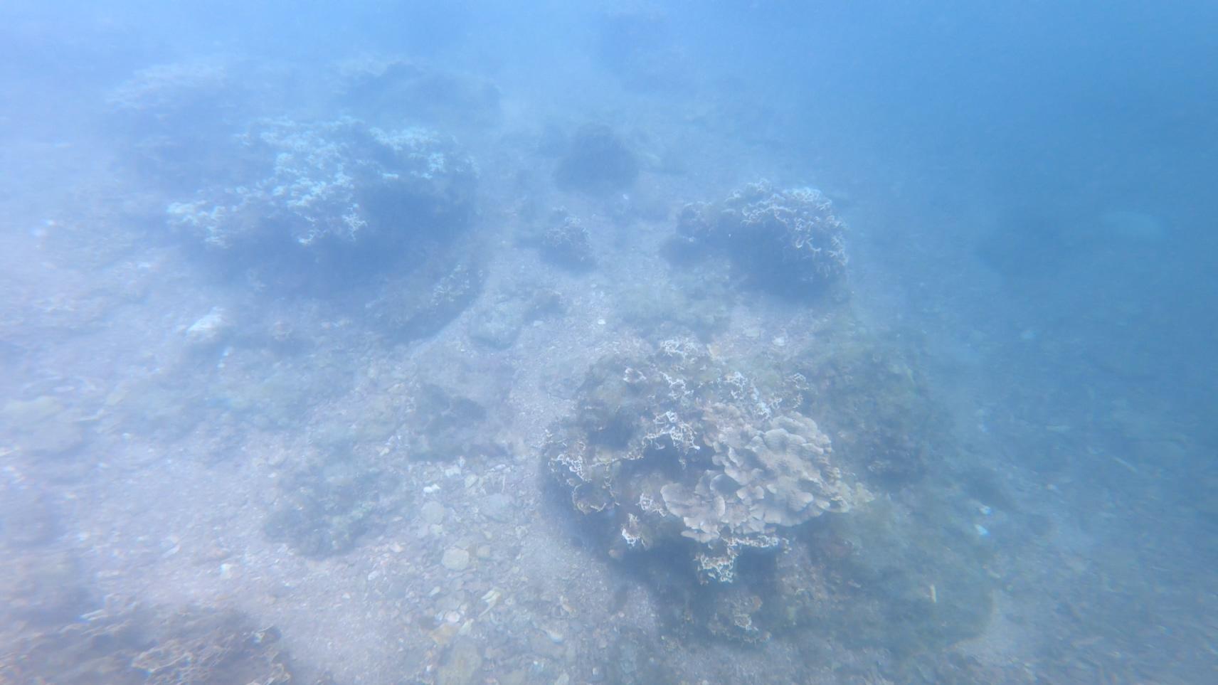 【认真摸鱼系列】在涠洲岛学习专业摸鱼技能-潜水