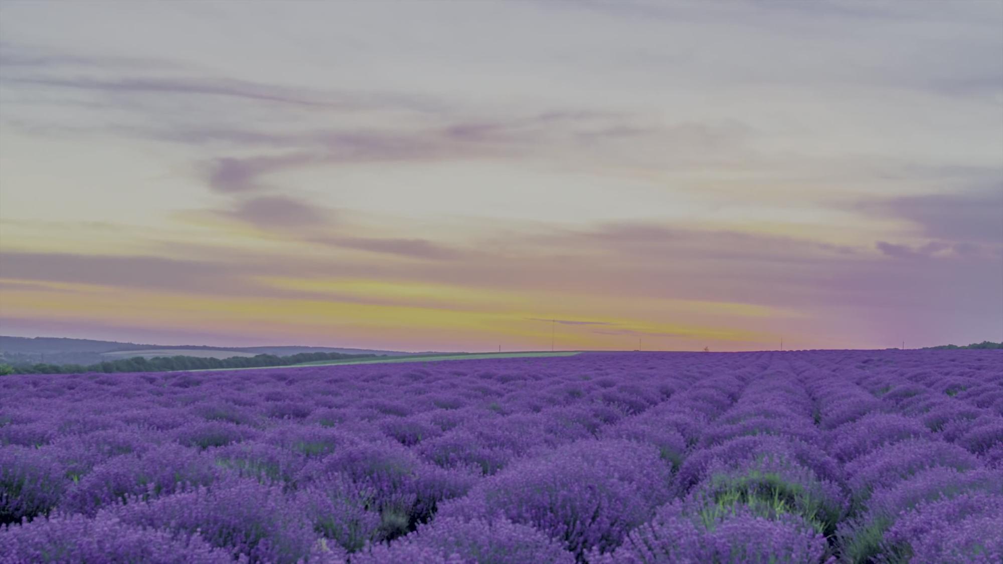 【放松】【自然的美景】【8K HDR 60FPS】