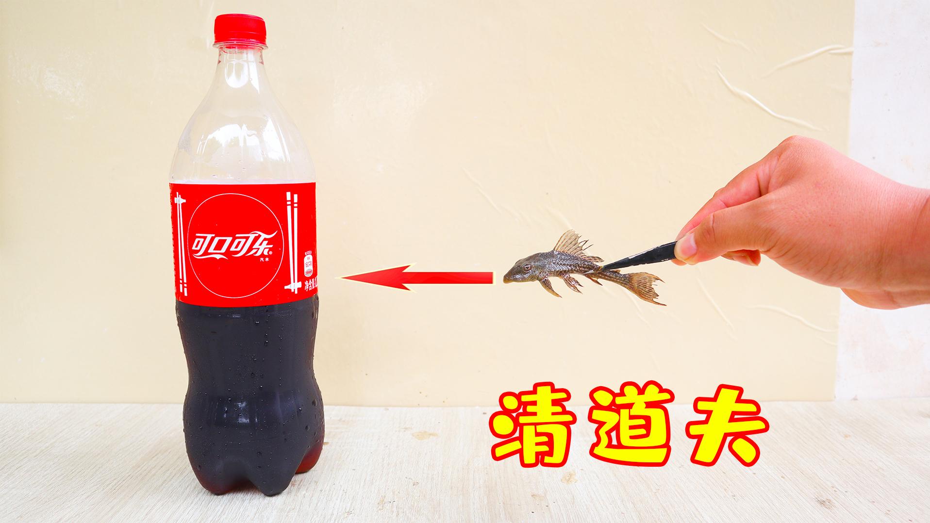 """将""""清道夫""""放入""""可乐""""里面,会发生什么?"""