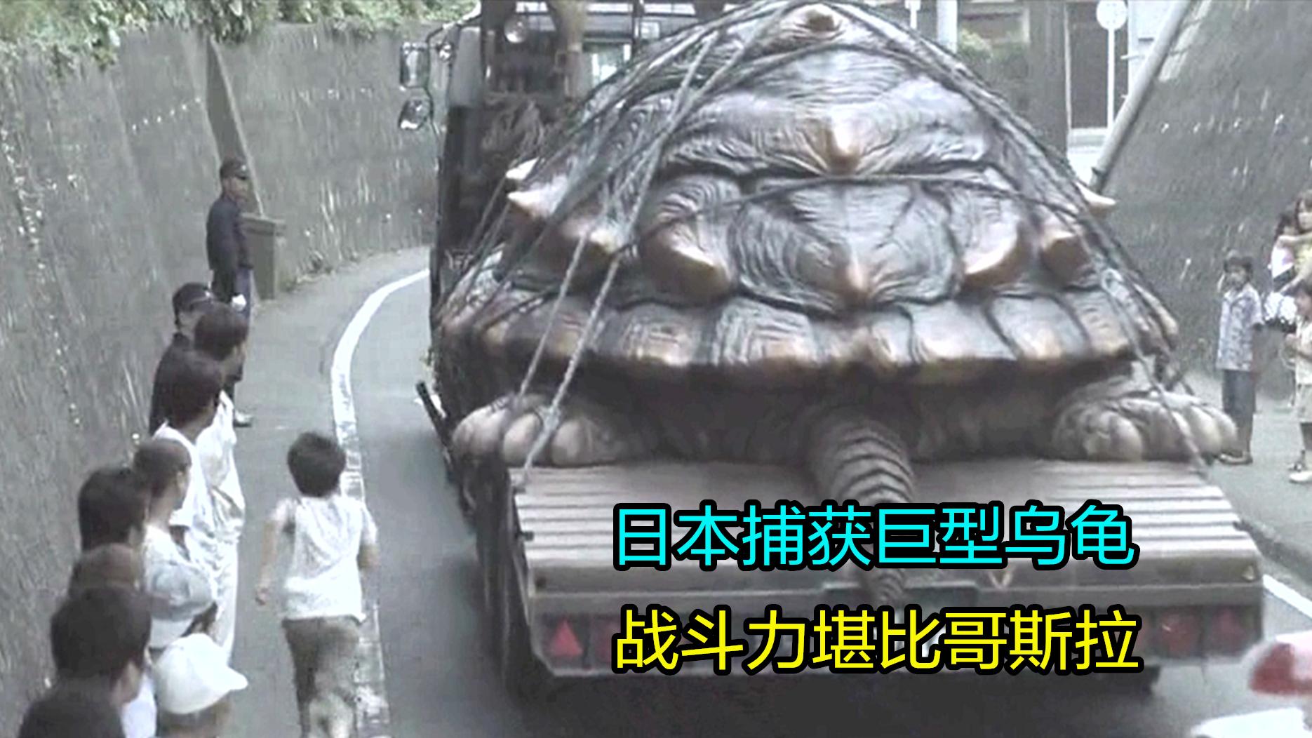 科幻片:日本捕获一只巨型大乌龟,不但能飞,战斗力堪比哥斯拉!