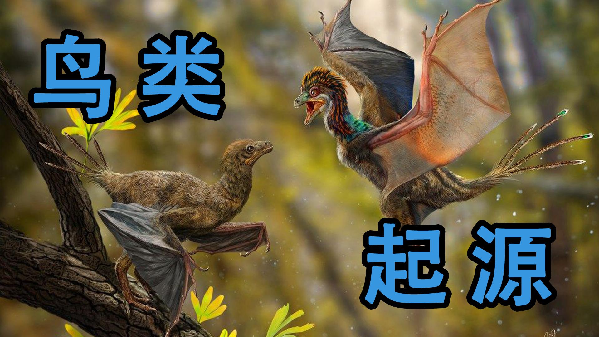 【鸟类起源】始祖鸟是最早的鸟吗?它和霸王龙有什么关系?为什么说鸟类起源于恐龙?【夏日蕉易战】