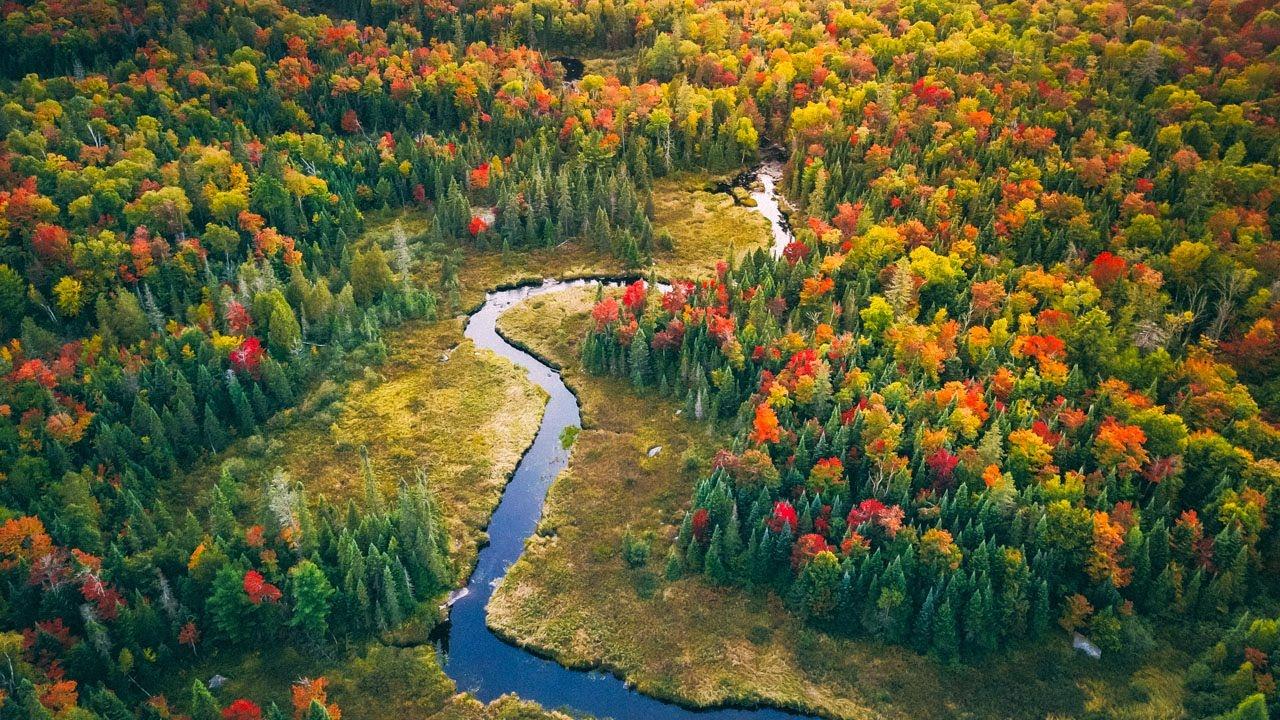 【放松】【加拿大阿岗昆公园】【4K】