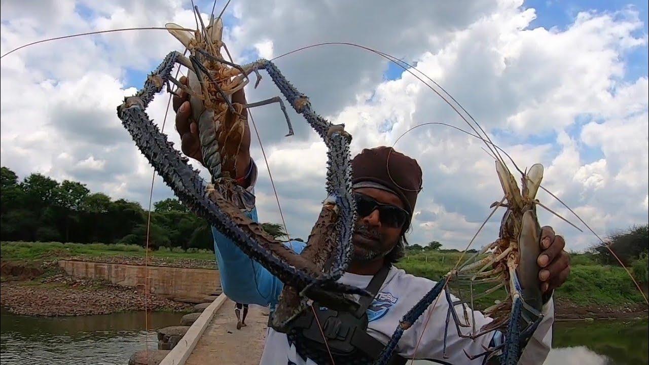 好大的河虾,印度大叔收获不错,印度虾都是这么大个儿的吗?