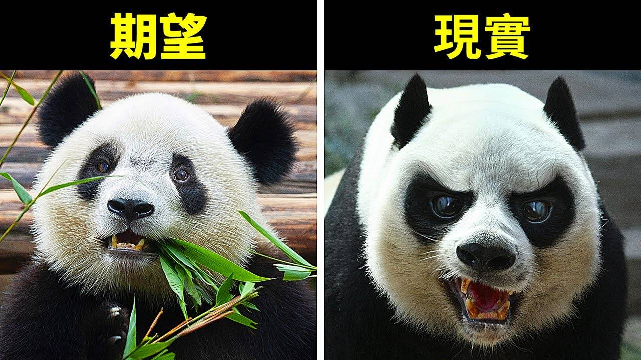 18種完全非無害的可愛動物