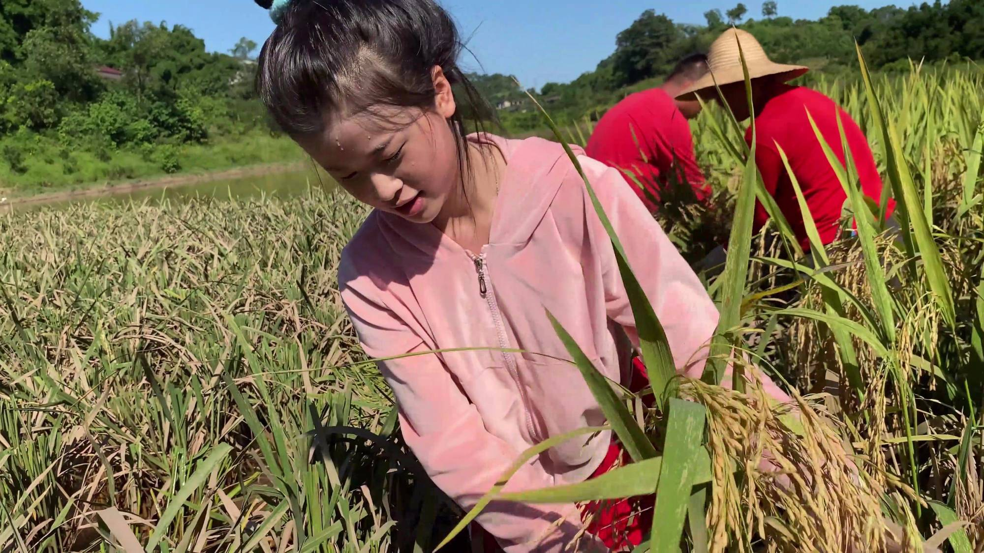 农民的辛苦稻谷知道,米饭的珍贵我们知道,节约粮食从我做起