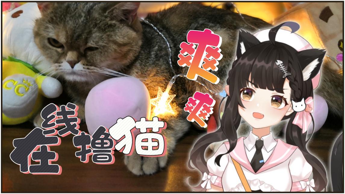 当众在直播间撸猫的猫猫