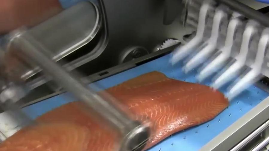 流水线上的鲑鱼,被安排的明明白白