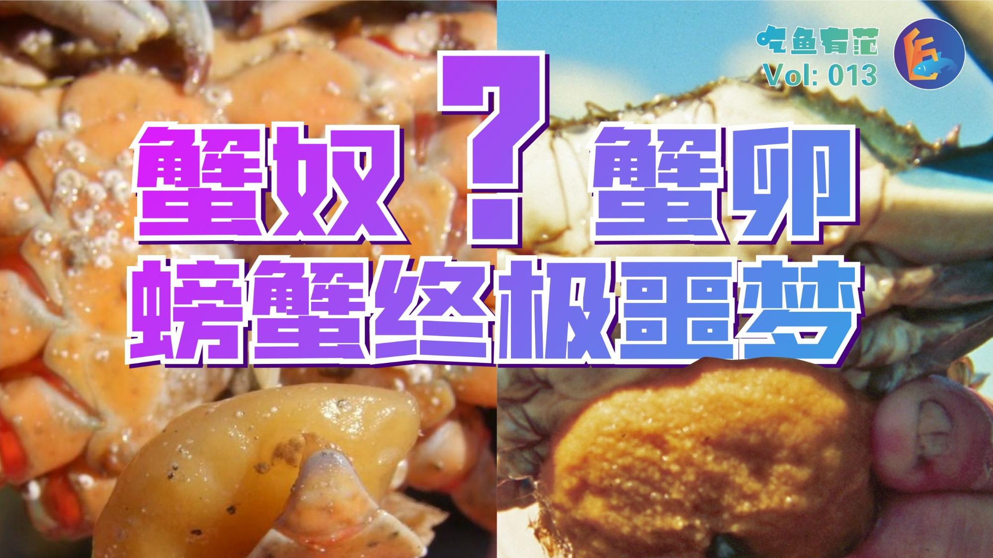 【超A新生计划】蟹奴:接近你,进入你,占有你!水产界的PUA,螃蟹的噩梦!