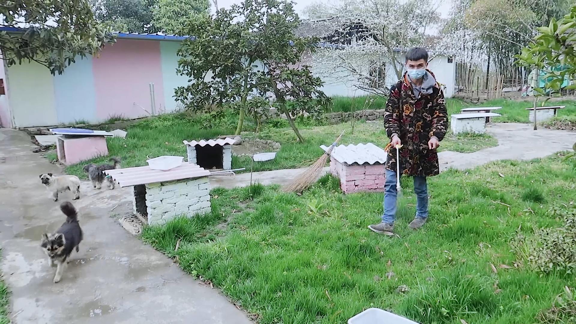 救助站日常:疫情期间对狗舍全面消毒,确保狗子们健康