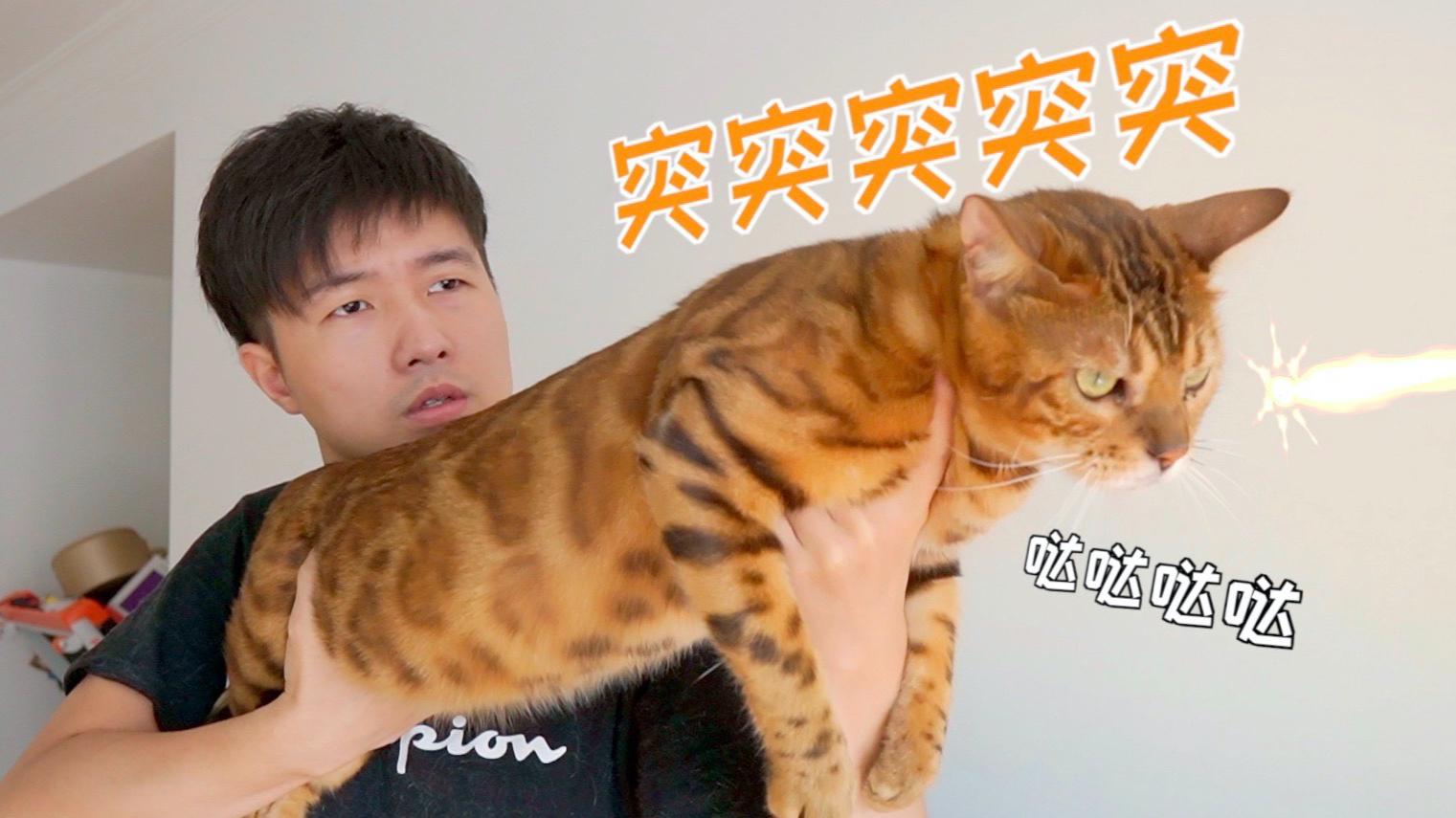 男人养猫,活着就好…