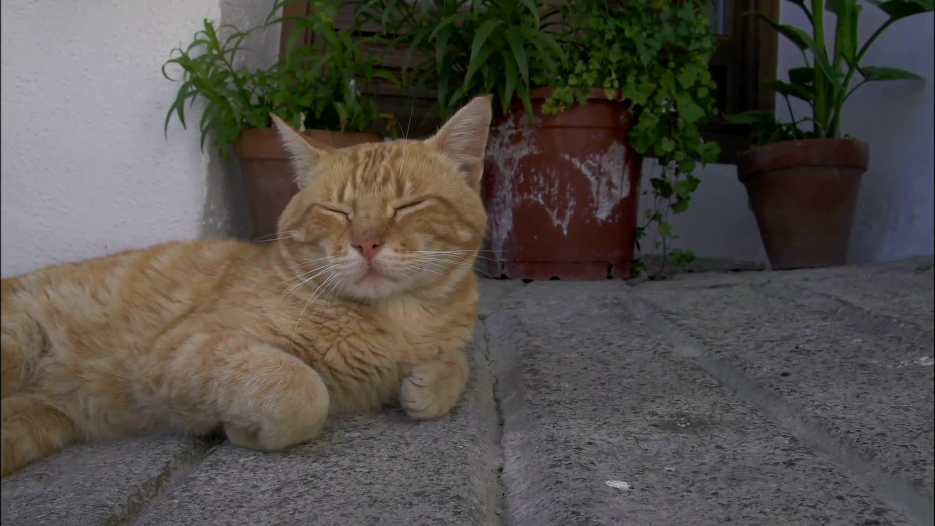 猫步走世界 [75集全] [每集三十分钟]