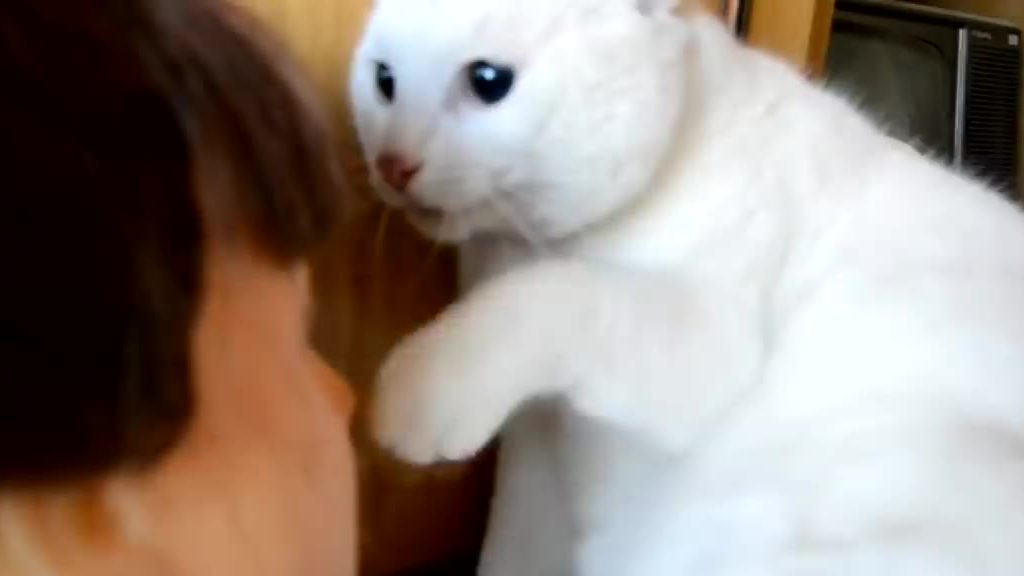 害怕时的猫猫