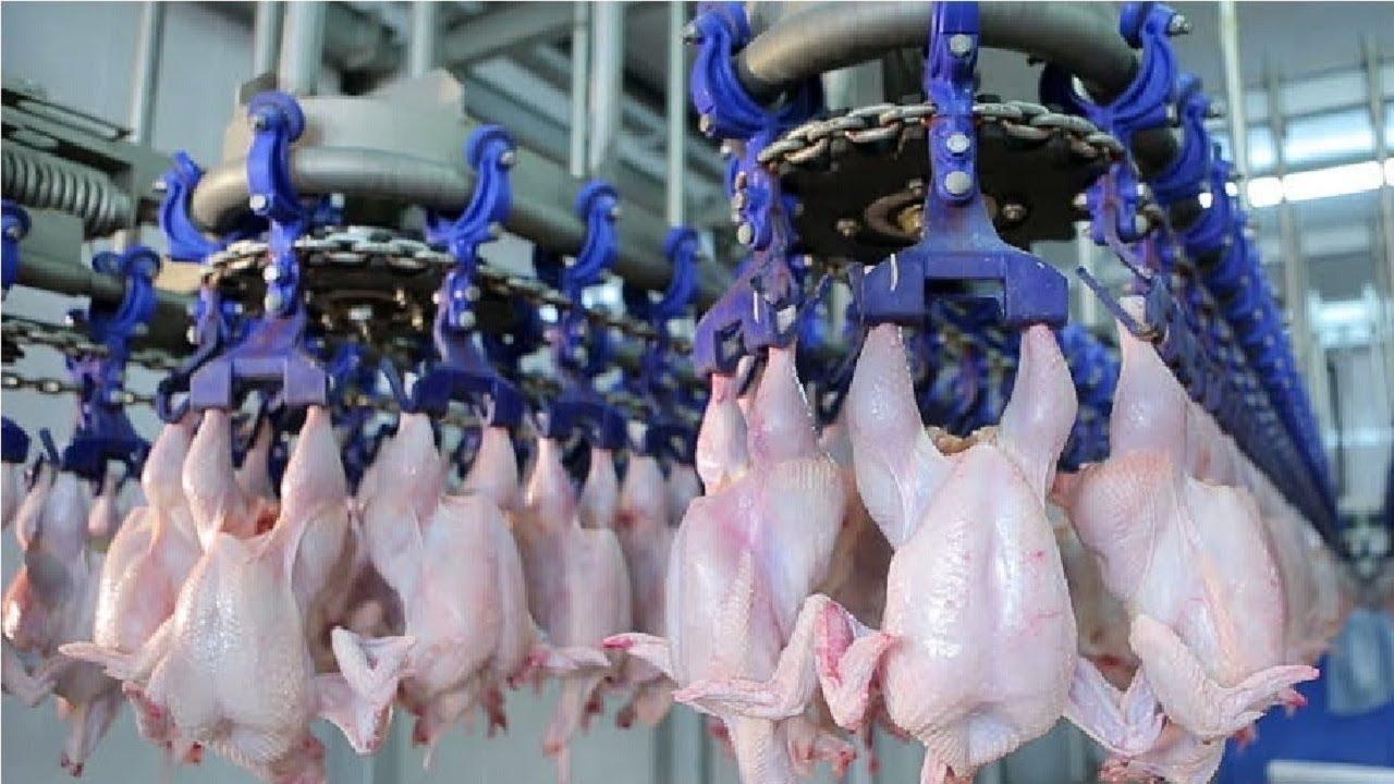 问下韩国这杀鸡技术如何,在国内是什么水平,在韩国在世界可是惊艳的操作!