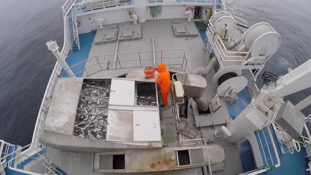 一艘来自挪威的现代渔船, 看看怎么捕捞的太先进了!