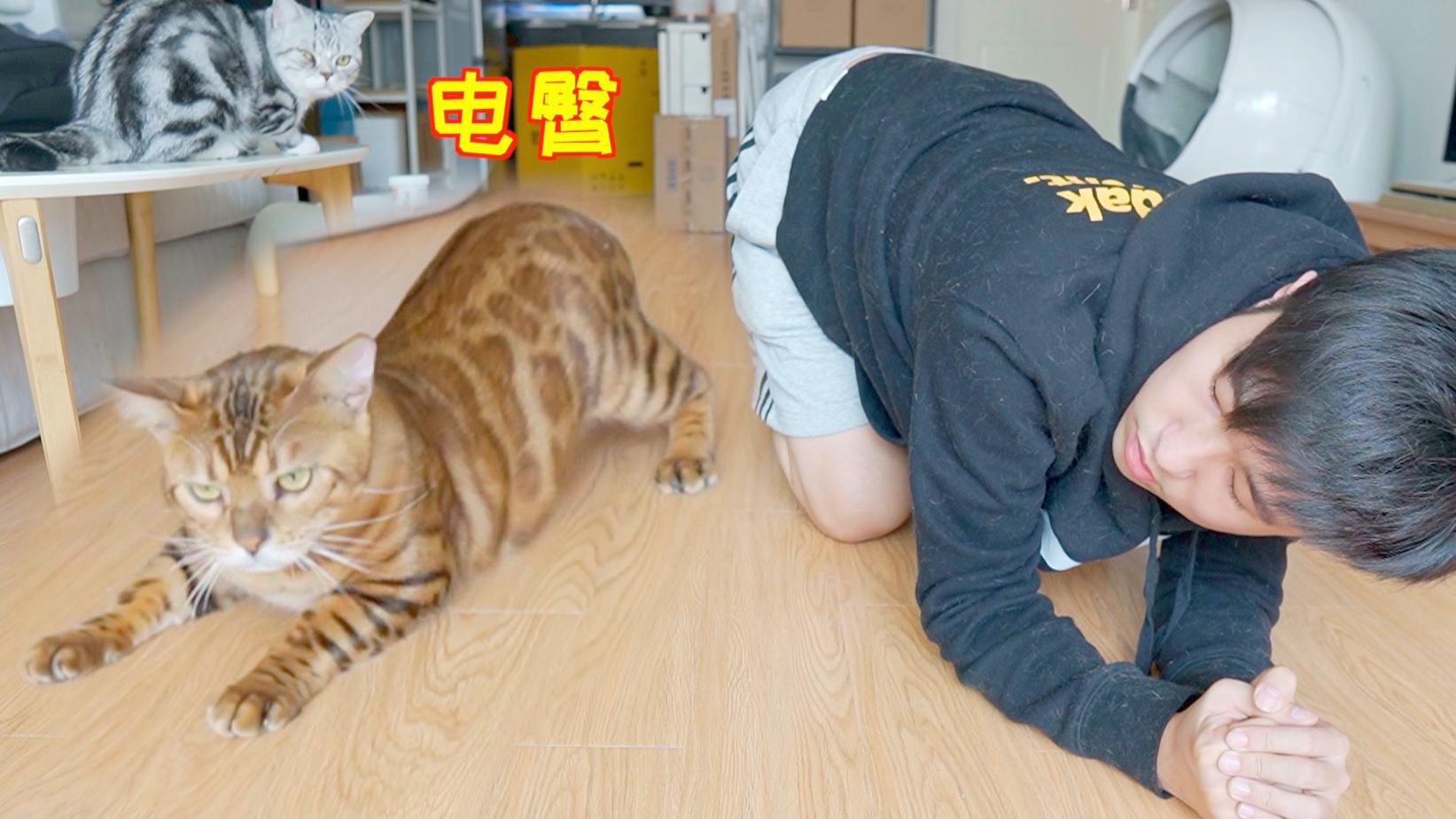 教家里猫扭屁股 学会后比我还能扭 秒变小电臀!