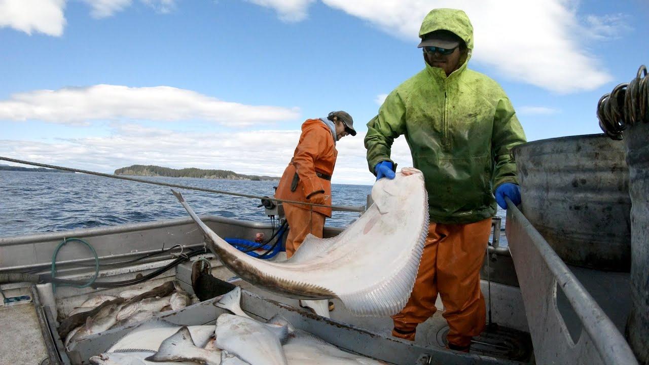 实拍渔民出海阿拉斯加捕捞比目鱼的海上日常生活和捕鱼作业
