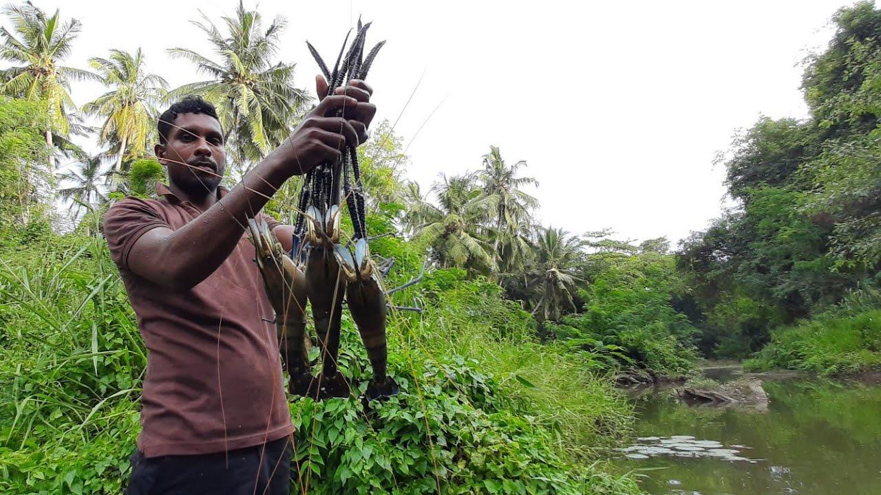 这种超大的巨型河虾你见过吗 ? 看看斯里兰卡男子是如何捕获的!