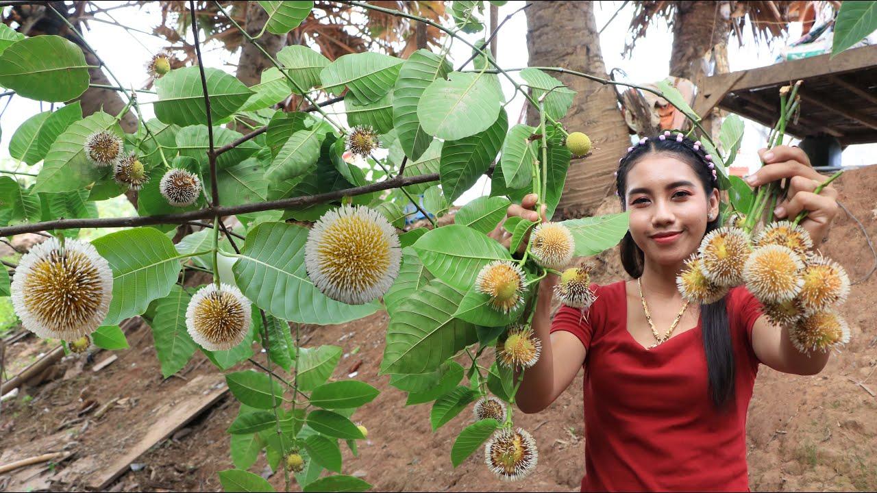 到柬埔寨,一定要尝尝这些特色野果