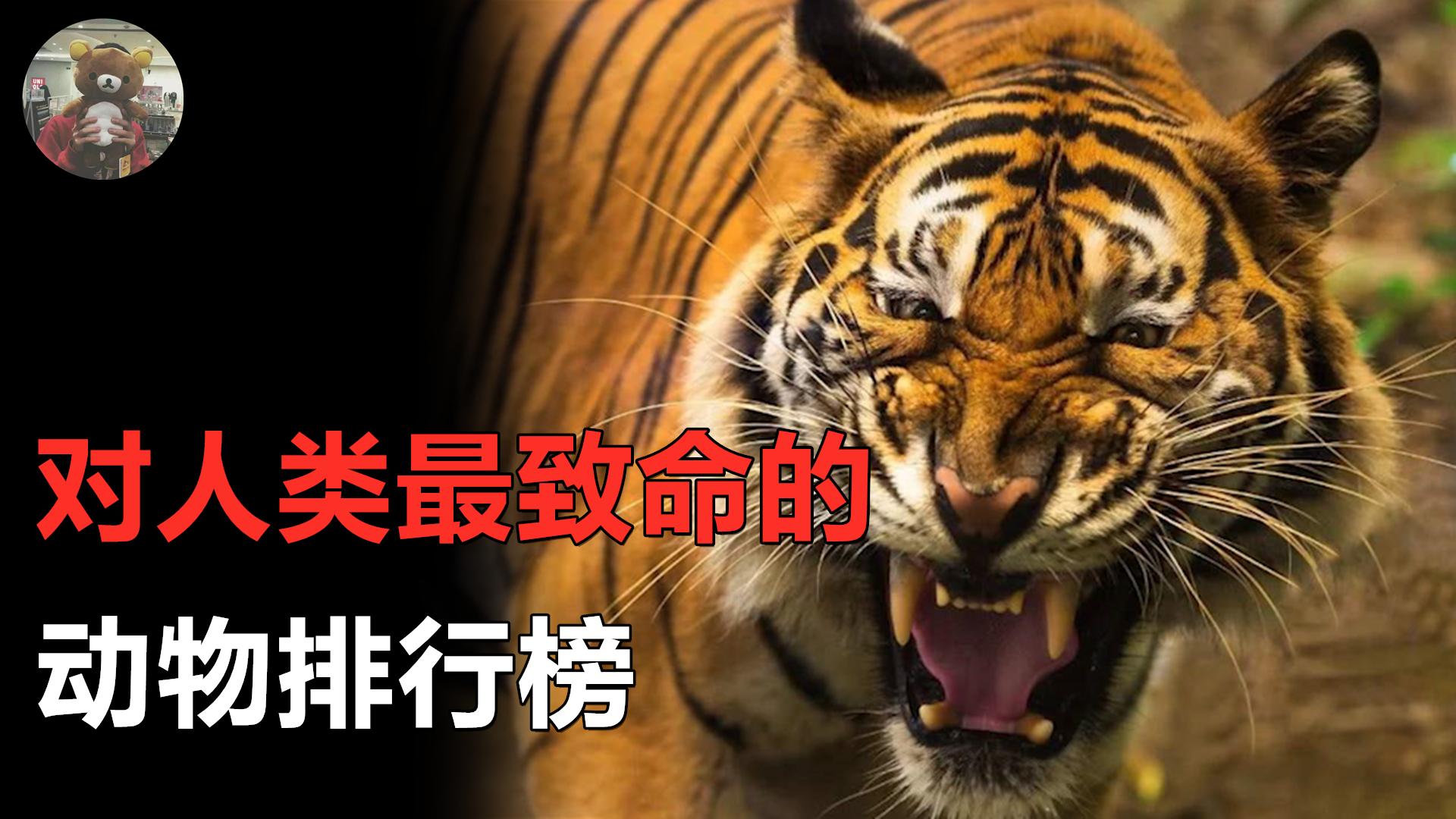 对人类最致命的动物是什么?老虎?狮子?大白鲨?你可能通通猜错