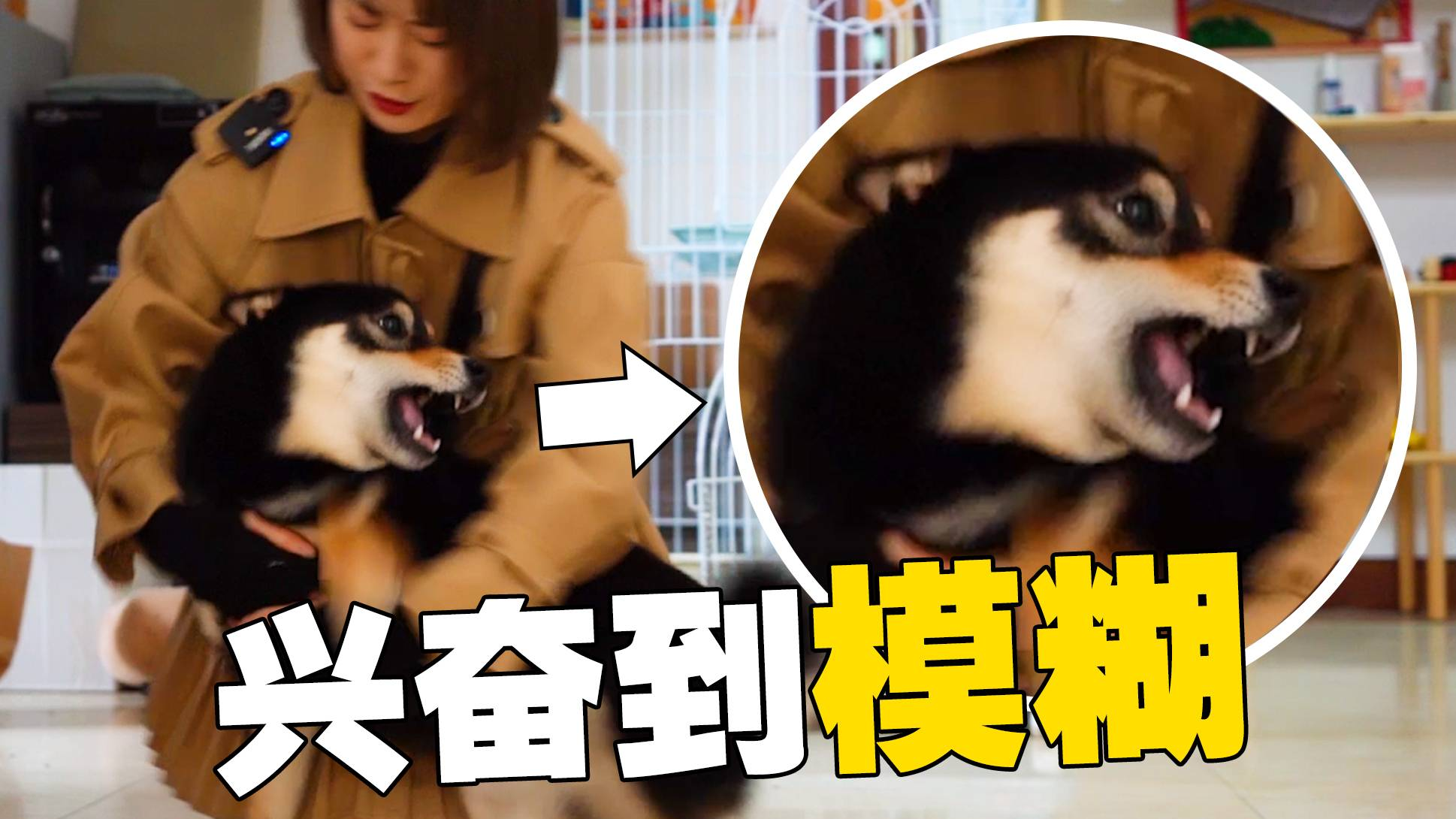 第一次遛狗被狂亲,这样的热情谁受得住啊!