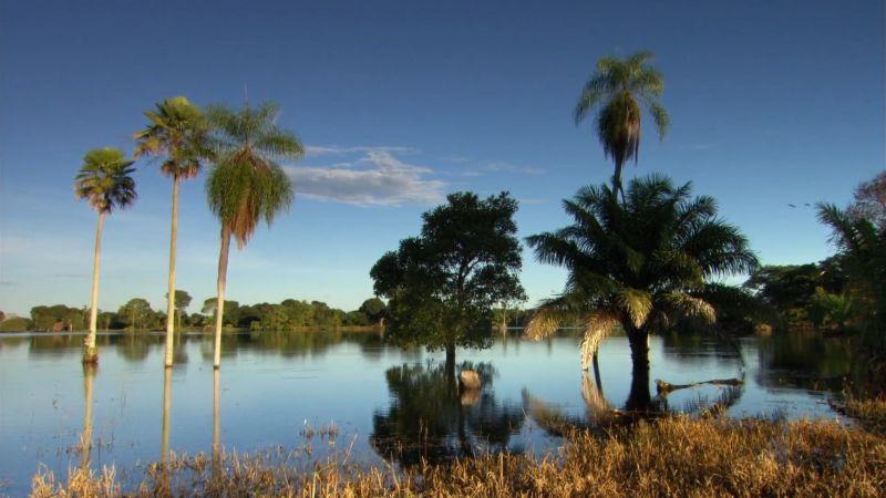 纪录片.神奇湿地.2020[高清][英字]
