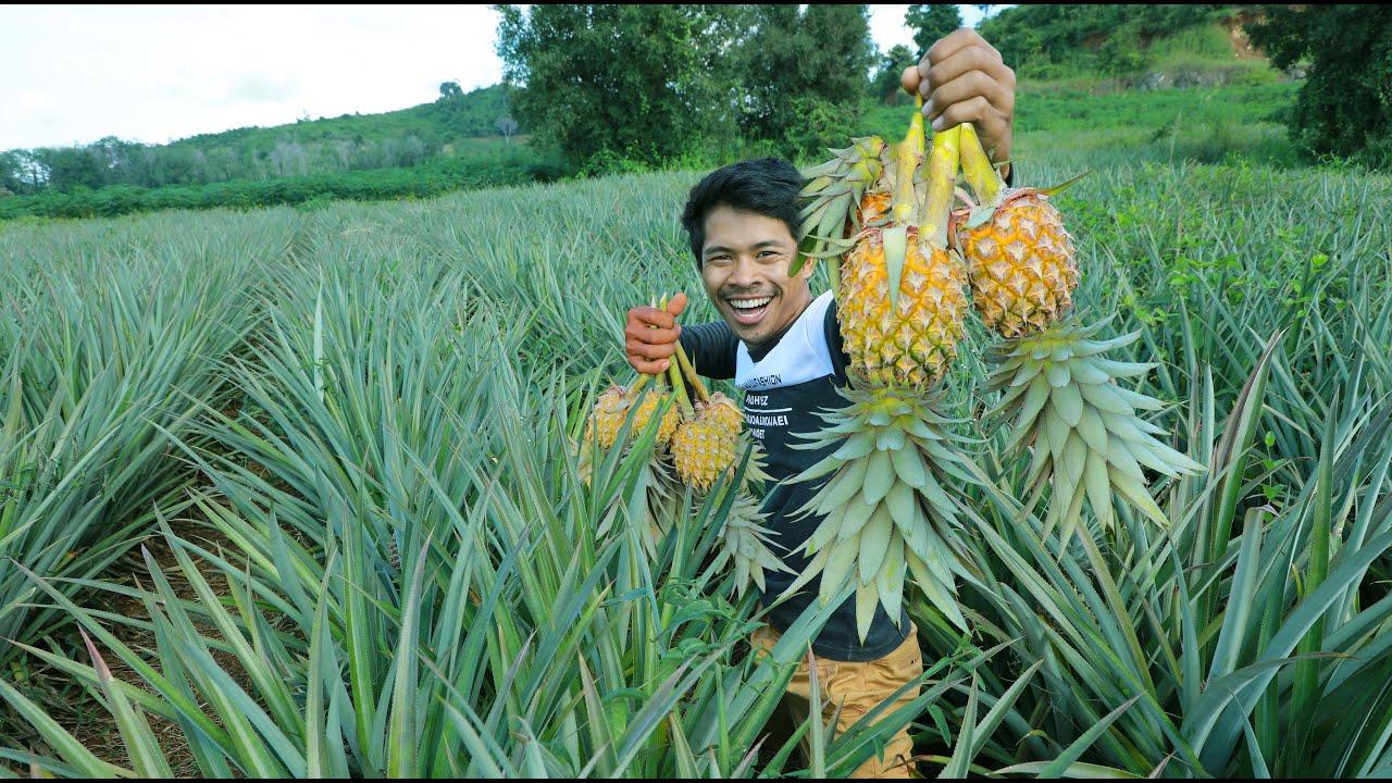 这个地方盛产菠萝,菠萝还是地里吃才过瘾!