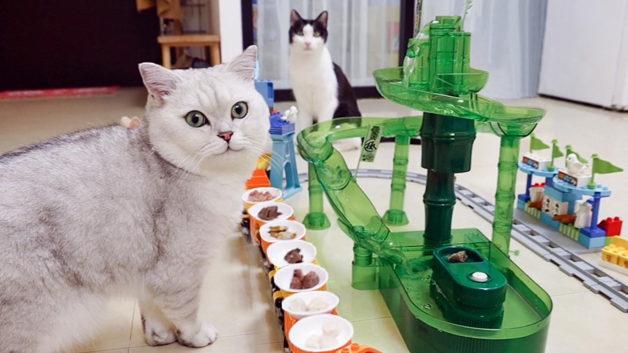 用流水素面机和乐高,给猫做一次自助餐!实现他的愿望!