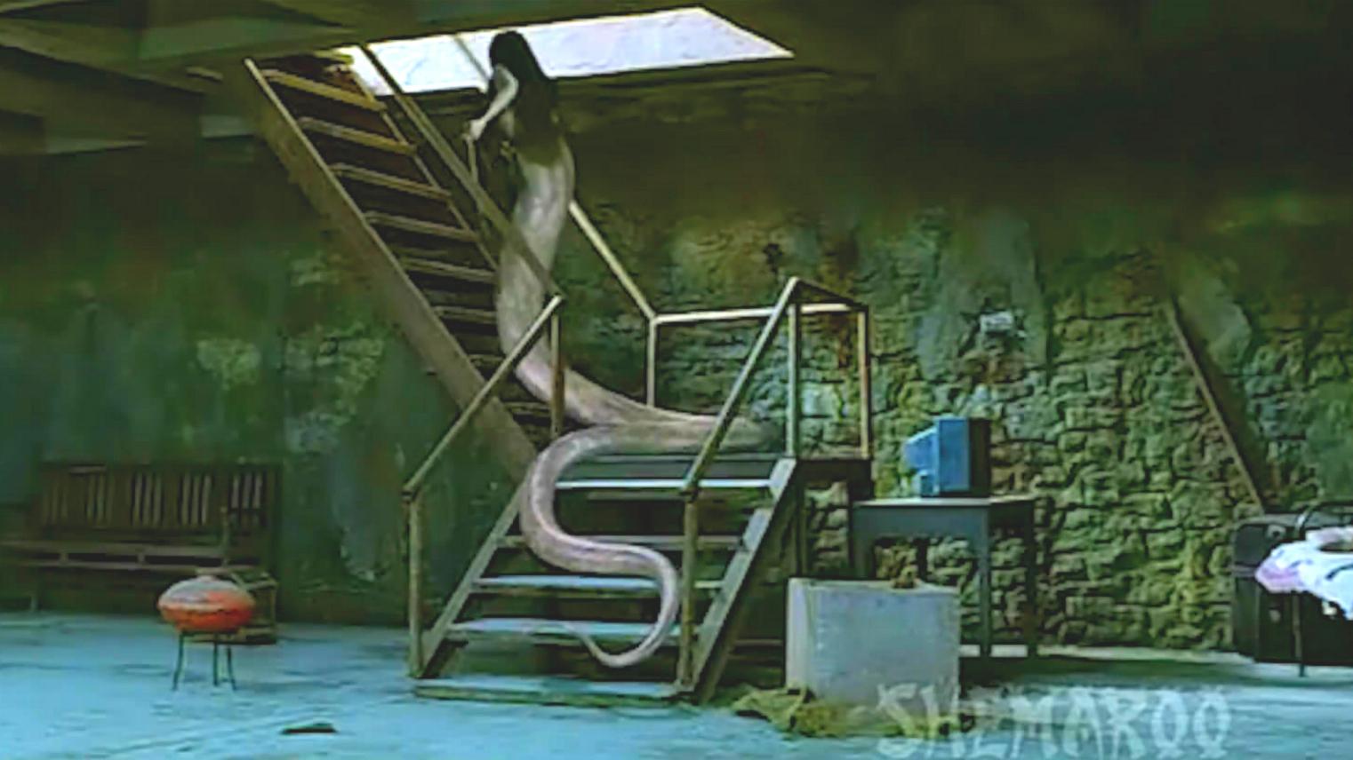 刺激,绝美蛇妖化为人形,只为寻找那个男人做一件不可描述之事!