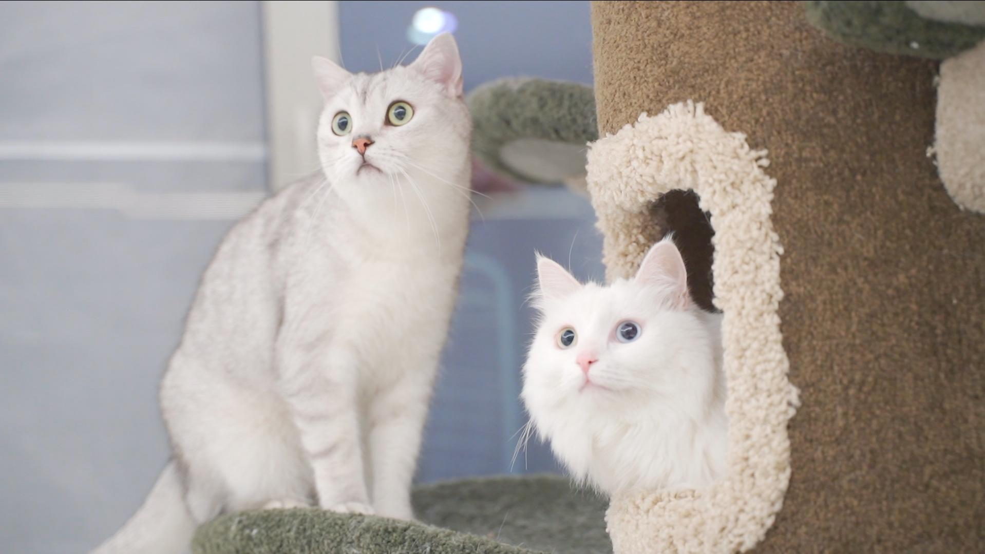 带猫咪搬进800万豪宅,嚯!这就是人不如猫的感受吗?