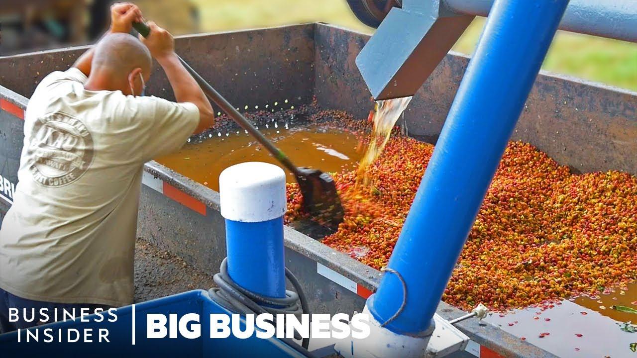 夏威夷咖啡农场如何加工数百万磅的咖啡 大生意