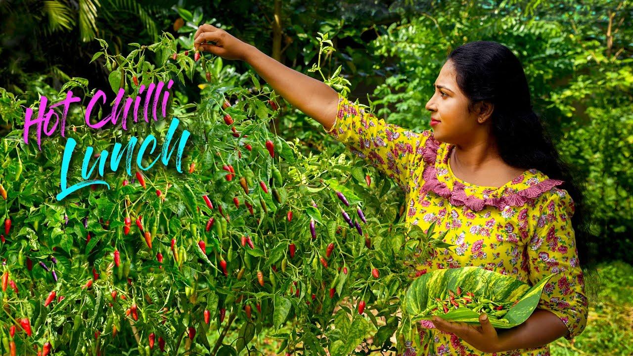 印度乡村女孩正在制作美味的辣椒菜