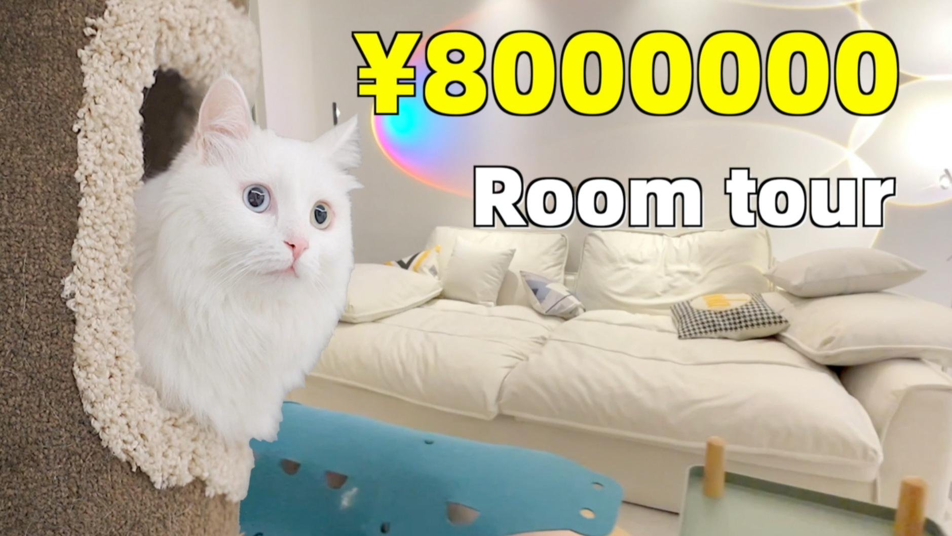 和三只猫一起住进杭州800万豪宅是什么体验?新家Room Tour!