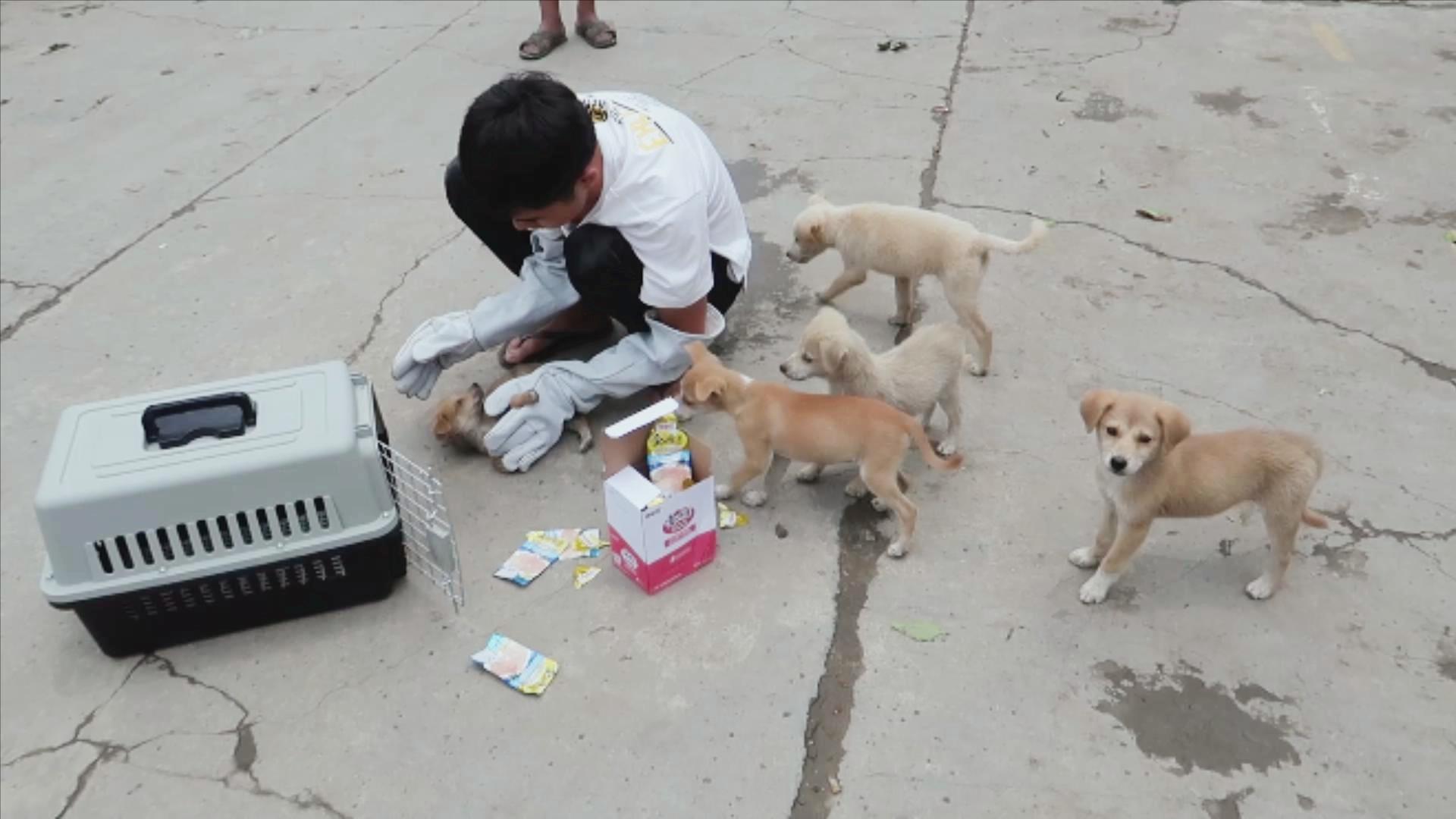 破纪录了,在菜市场捡了5只小狗,非要跟着我们走