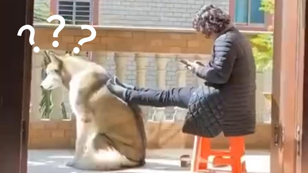 《 动 物 迷 惑 行 为 大 赏 ➋➒》