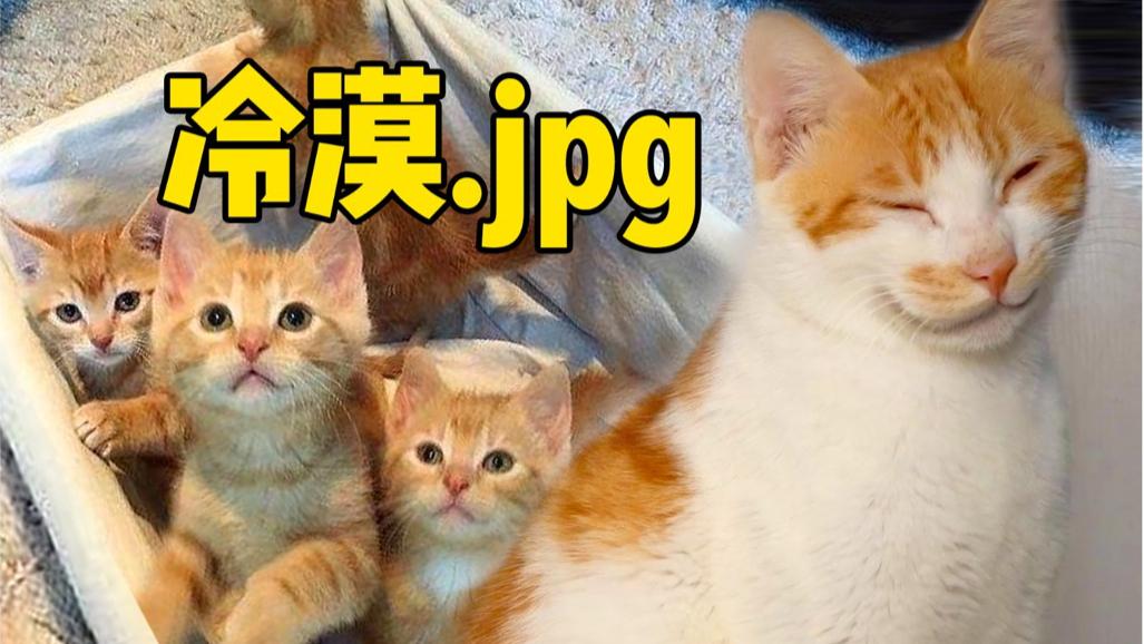 橘猫妈生完宝宝就去玩,4个萌猫宝宝怕冷抱团互相取暖,太可爱了