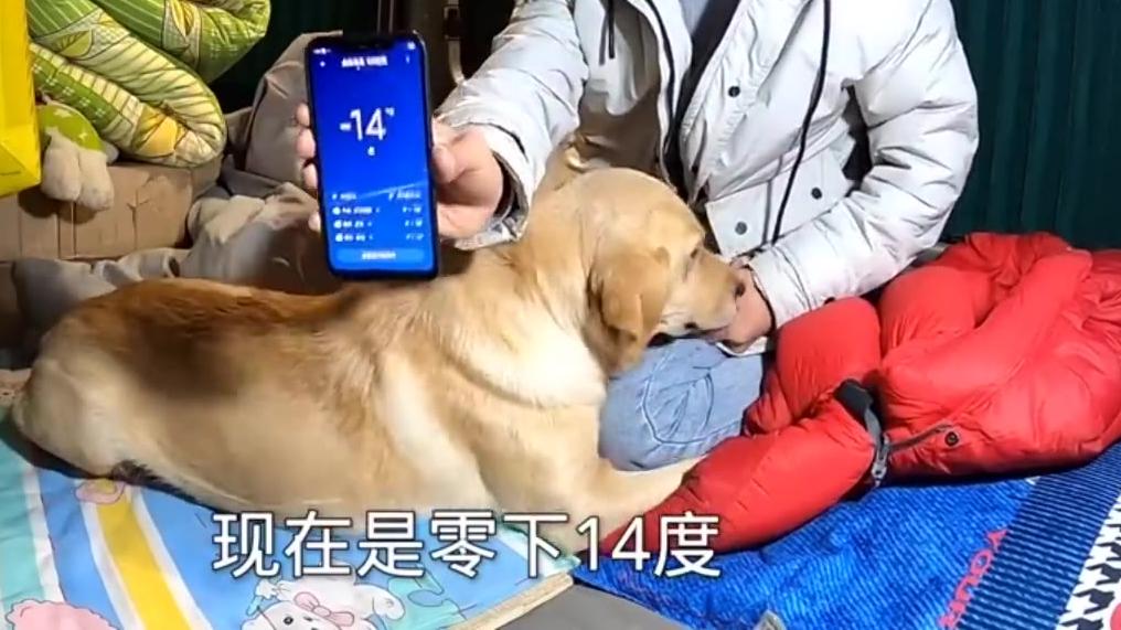 小伙零下20度和狗睡车里,狗子秒睡还打咕噜