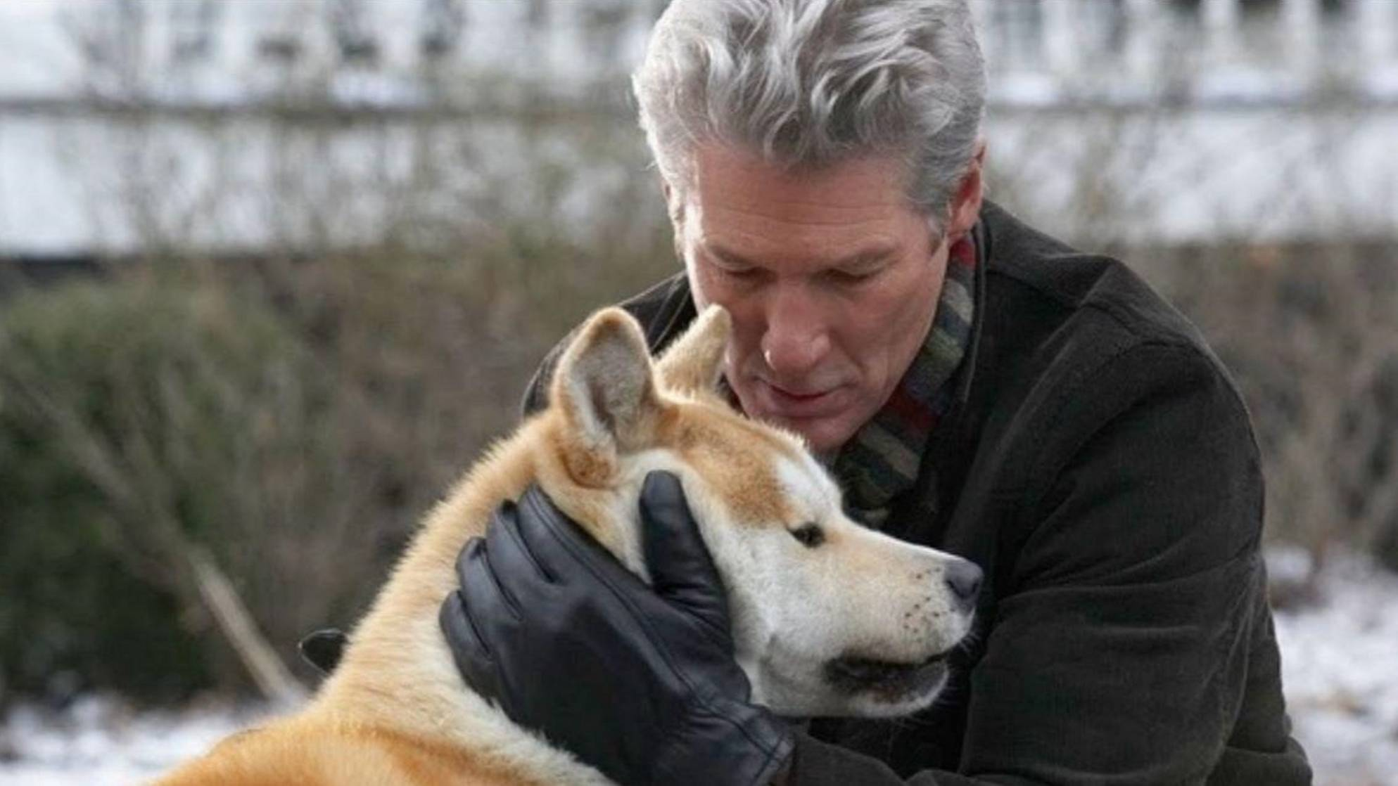 主人离世后,小狗仍守候在原地足足十年,直到死去,让人感动!