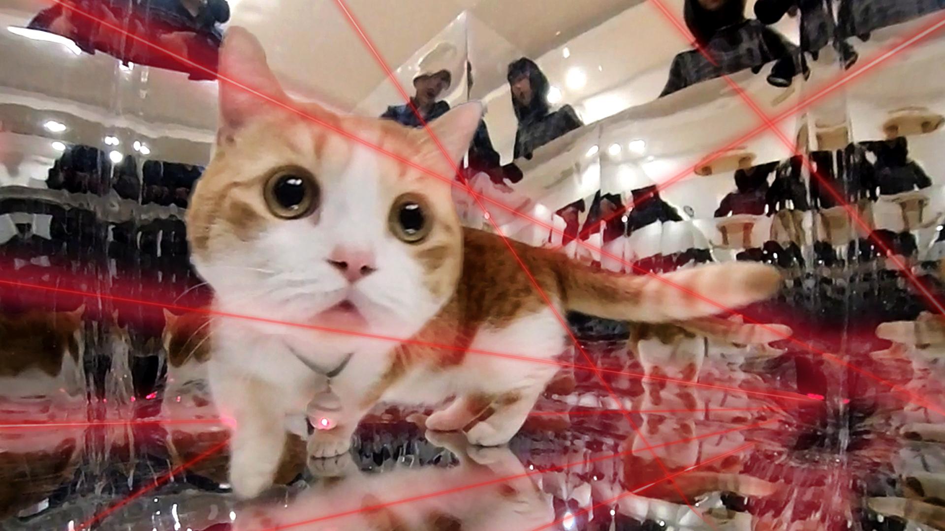 当猫咪脖子挂着红外线,进入镜子迷空,神奇的一幕发生了!